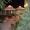 Круглогодичный отдых в Судаке,  Крым,  коттедж SunDays #212608