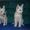 Породистые щенки белой швейцарской овчарки #594610