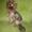 чудесные щенки йорки #620921