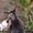 Красивые бездомные котята ищут хозяев #672945