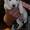 Продаются щенки Джек-Рассел терьера #769307