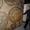 Оникс,  сляб,  мрамор #865652