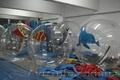 водный шар,  водный зорб,  waterball