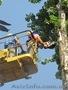 Удаление деревьев частями,  удаление аварийных деревьев.