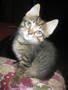 СРОЧНО!!! Милые котята ждут новых хозяев!!!