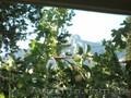 Сдаю свой дом с беседкой в Крыму в Алупке. - Изображение #8, Объявление #1361129