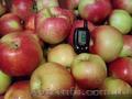 Продажа. Плодоносящий яблоневый сад в Крыму - Изображение #4, Объявление #1485090